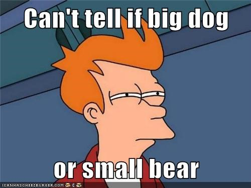Can't tell if big dog  or small bear