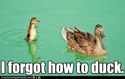 ducks forgot funny - 7465465344