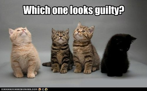 kitties funny guilty - 7465872384