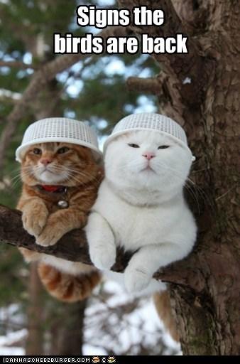 birds,hats,funny
