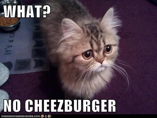 Cheezburger Image 7465896448