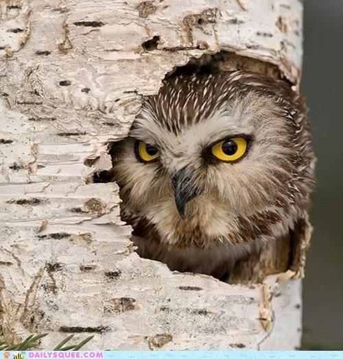 password Owl grumpy - 7465965312