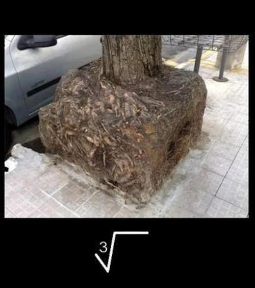 puns,tree,roots,cube root,math,funny