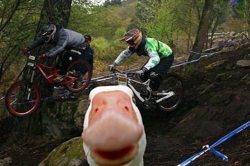 photobomb,duck,bikes,funny