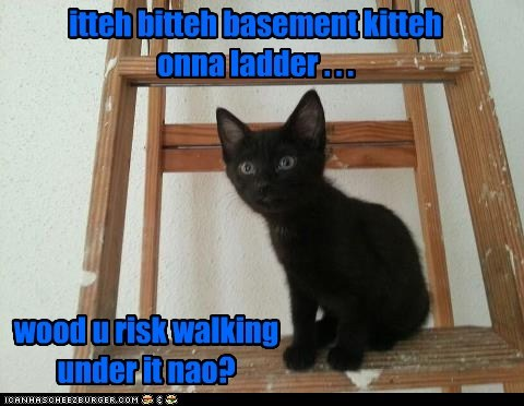 itteh bitteh basement kitteh onna ladder . . . wood u risk walking under it nao?