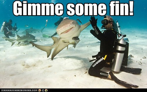 Gimme some fin!