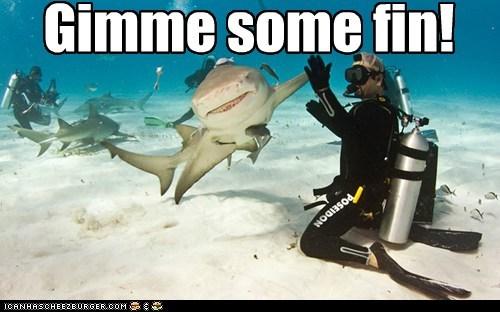 cool sharks scuba - 7466460928