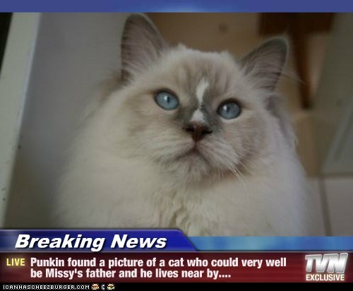 Breaking News - Punkin found a picture of a cat who could very well be Missy's father and he lives near by....