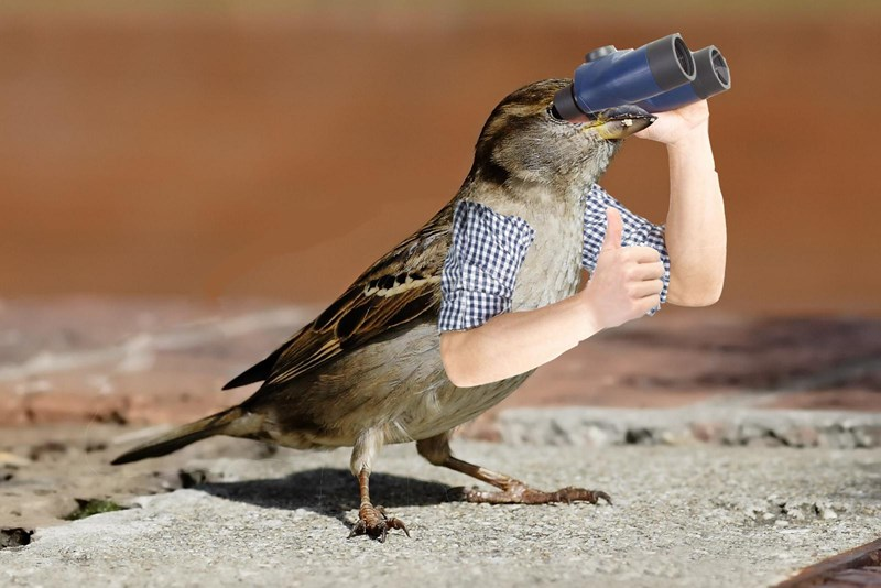 memes of birds with photoshopped arms to look funnier