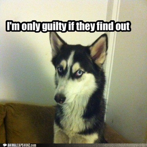 funny guilty - 7467608832