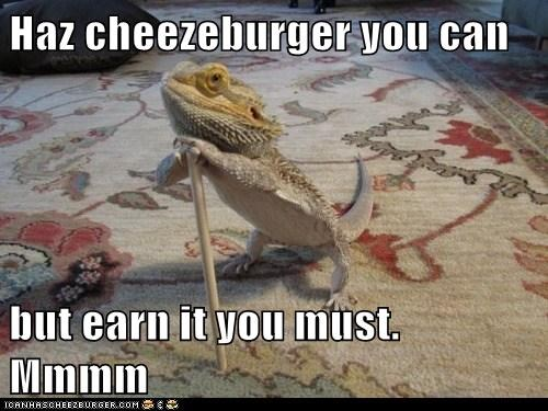 Haz cheezeburger you can but earn it you must. Mmmm