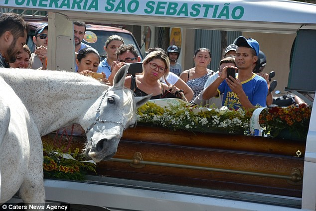 owner funeral heartbreaking Video horse crying - 7468549
