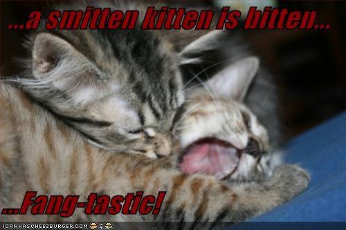 A Smitten Kitten Is Bitten Fang Tastic Cheezburger Funny
