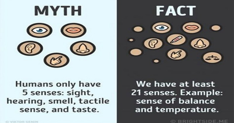 myths facts truth interesting - 7469829