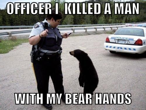 Confession Bear killer funny police - 7470767872