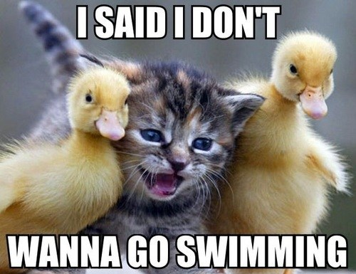 cat ducks swimming funny