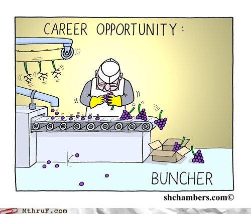 buncher,grapes,bachelors degree,careers,funny