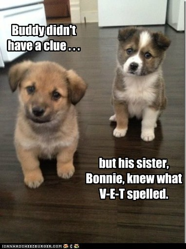 but his sister, Bonnie, knew what V-E-T spelled. Buddy didn't have a clue . . .