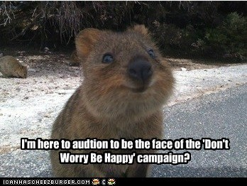 quokka,cute,smile