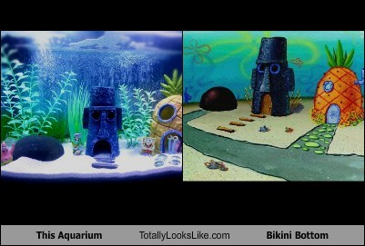 bikini bottom,aquariums,cartoons,SpongeBob SquarePants