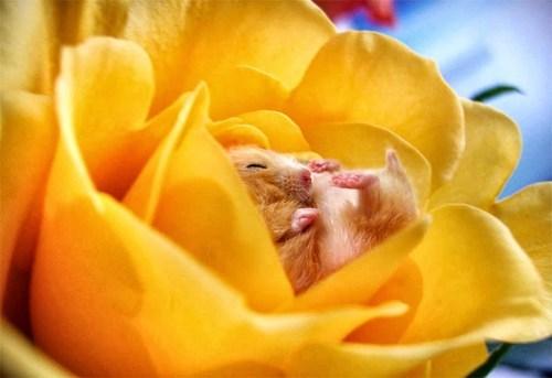 nap blossom Flower - 7475042304