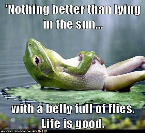 relaxing funny frog - 7475347968