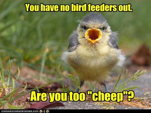 bird feeder cheap funny - 7475375616