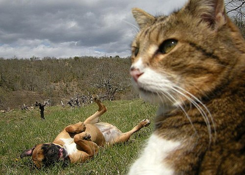 cat photobomb majestic dogs funny
