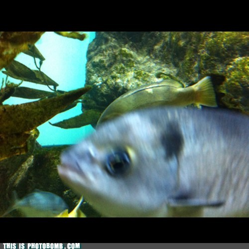 photobomb fish funny - 7476870656