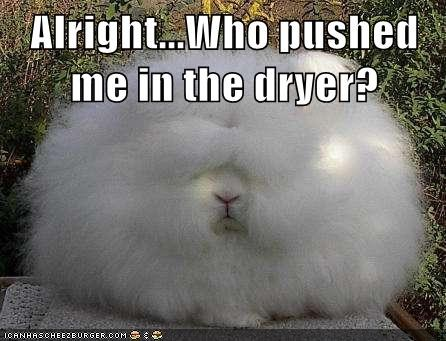 dryer poofy cute bunny