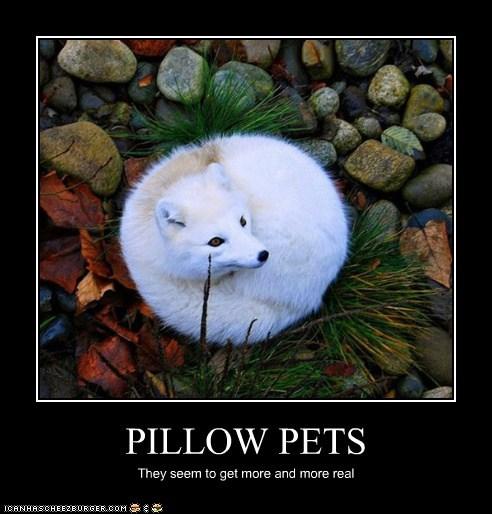 Pillow fox squee