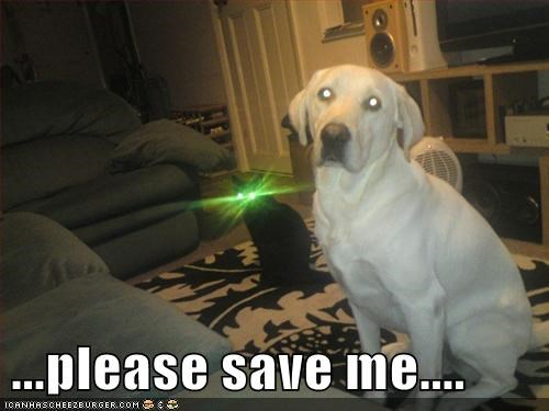 cat save me eyes lasers