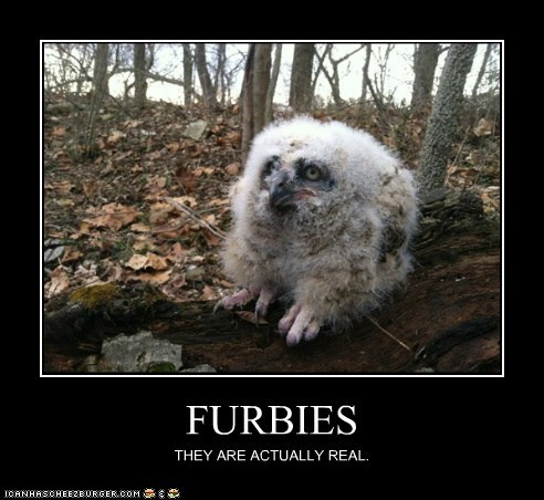FURBIES THEY ARE ACTUALLY REAL.