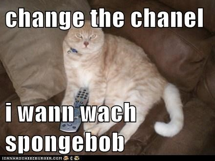 Cheezburger Image 7478654720