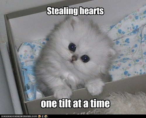 Stealing hearts one tilt at a time