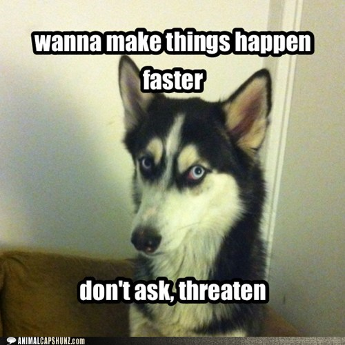 meme huskey bad advice funny - 7479673856