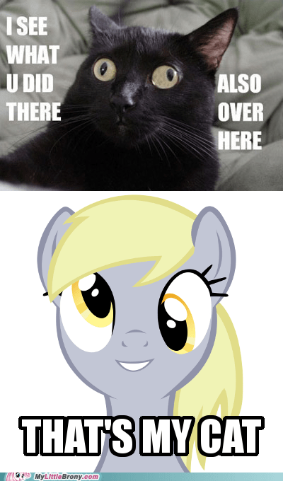 derpy hooves Cats funny derp animals - 7480240896