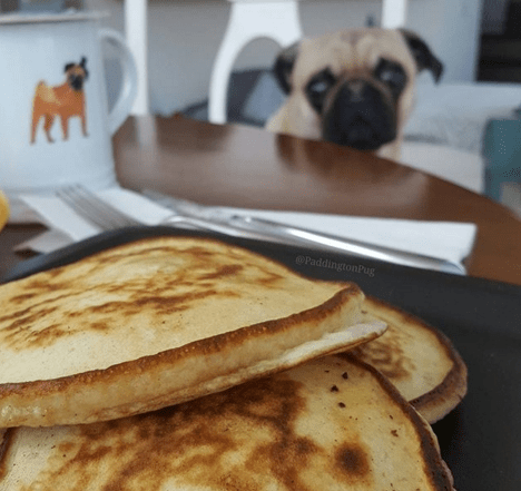 dogs,pancakes,Cats
