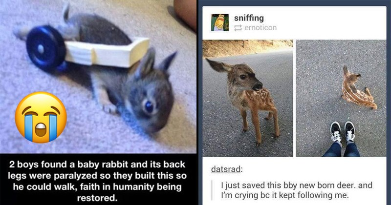 cute animals memes pics | 2 boys found baby rabbit and its back legs were paralyzed so they built this so he could walk, faith humanity being restored. | sniffing ernoticon datsrad just saved this bby new born deer. and crying bc kept following
