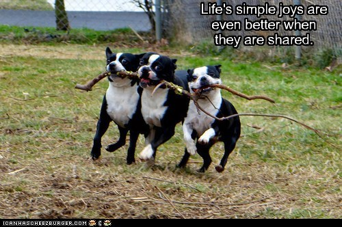 stick,sharing,funny