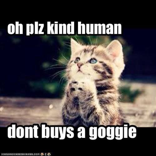 oh plz kind human
