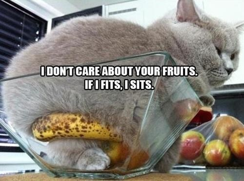 if it fits sit funny fruit