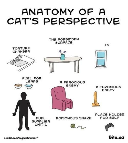 Chart anayomy perspective funny - 7482235392