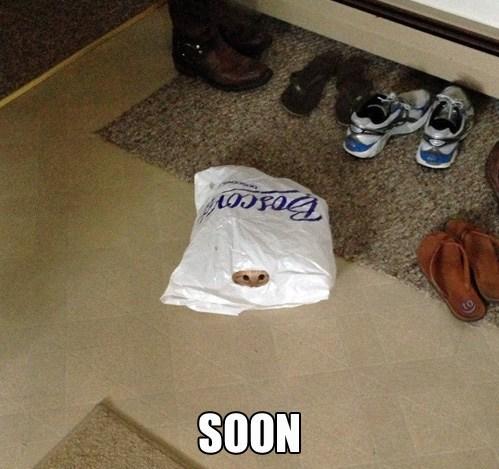 cat,bag,SOON,funny