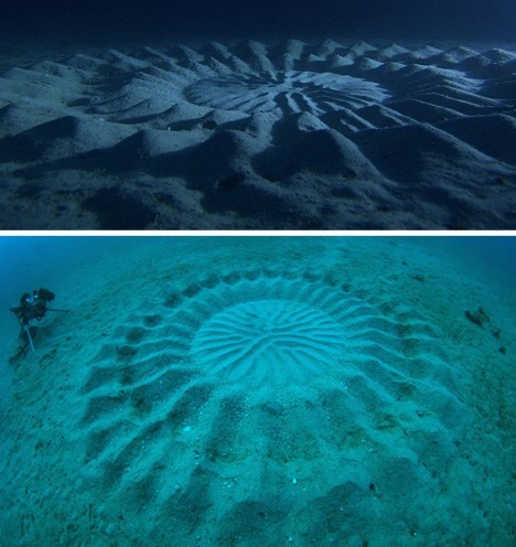 oceanography,crop circle,pufferfish,science,funny