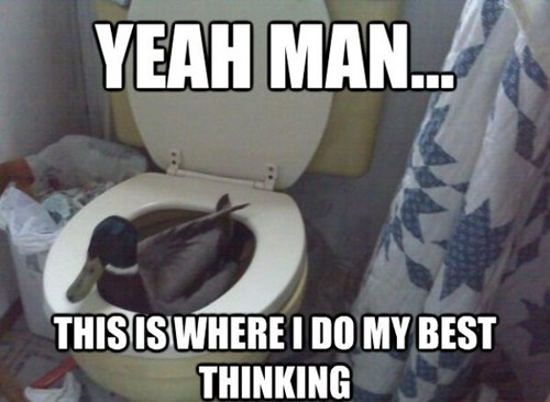 bathrooms ducks funny toilets - 7482718464