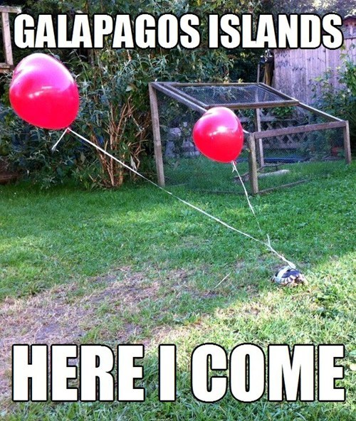 galapagos islands,IRL,turtles,funny