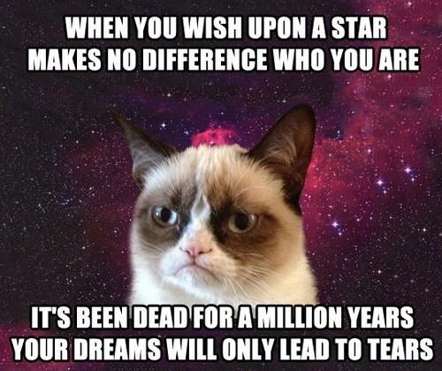 Grumpy Cat stars lion king funny - 7482763264