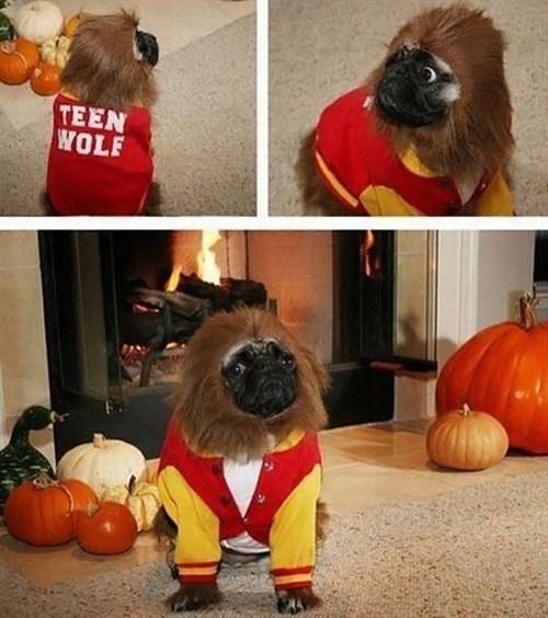 costume,pug,teen wolf