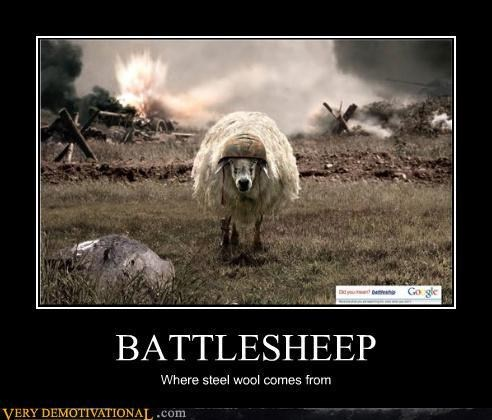 Battle steel wool sheep funny